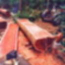 паддук,драгоценная, древесины,красное, дерево.