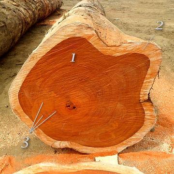 Спил,падук, padouk, красное,дерево,древесина, Тайланд, лаху, путешественник, Foma07, дрова, интересно, статья, реммани, ядровая, древесина, заболонь, годичные, кольца