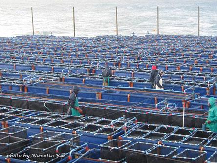 Морская ферма в Новой Зеландии