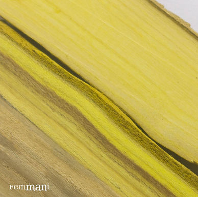 Необычный цвет дерева барбарис