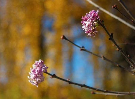 Чудеса золотой осени и нежданный стих