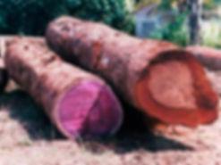 Амарант,драгоценное,фиолетовое,бревно,лес.