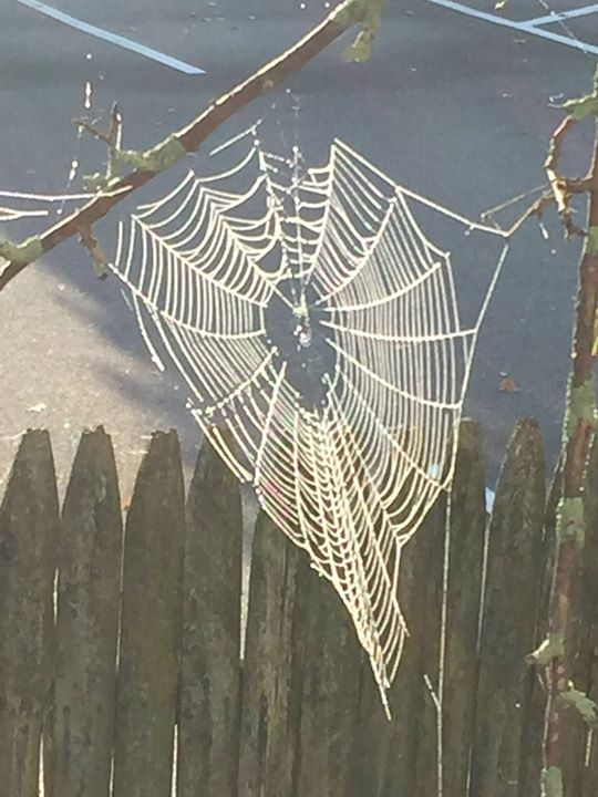 Chilly spider