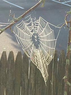 Chilly spider