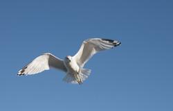 111414_seagulls-76
