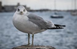 010116_seagulls-14