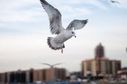 121916_Seagulls-38