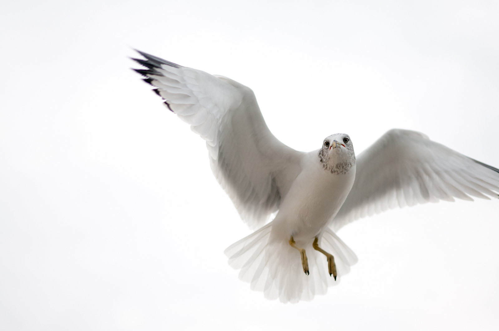 121916_Seagulls-44