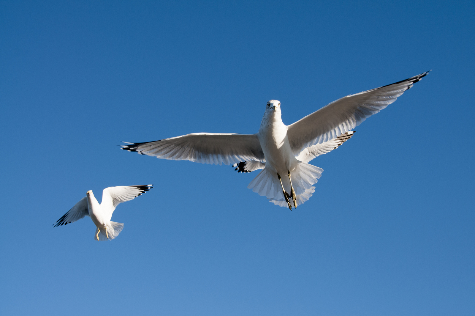 111414_seagulls-29