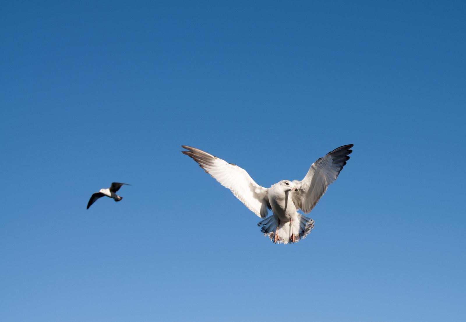 111414_seagulls-65