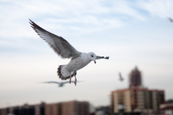 121916_Seagulls-40
