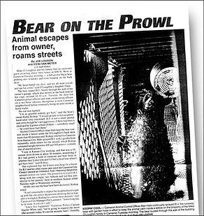 co_bear_prowl.jpg