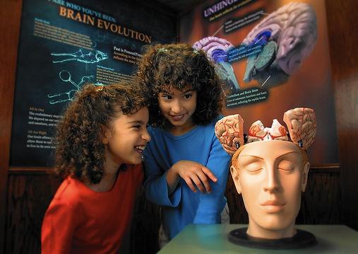 Brain_Exhibit.jpg