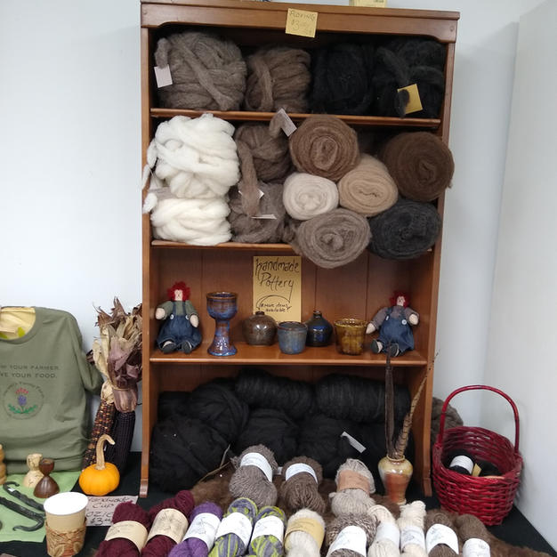 Roving and yarn from our Shetland Sheep