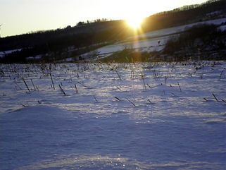 Winter_0010_edited-1.JPG