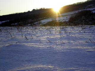 Winter_0010_edited-1.JPG