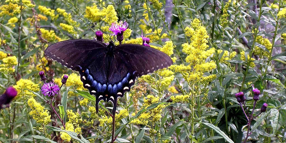 3:00 p.m. Butterflies and Other Insects - Larry McDaniel  (9 participants maximum)
