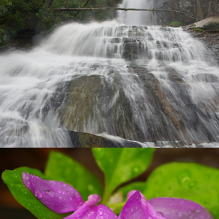 3:00 PM Hike to Jones Falls - Marty Silver (9 participants maximum)