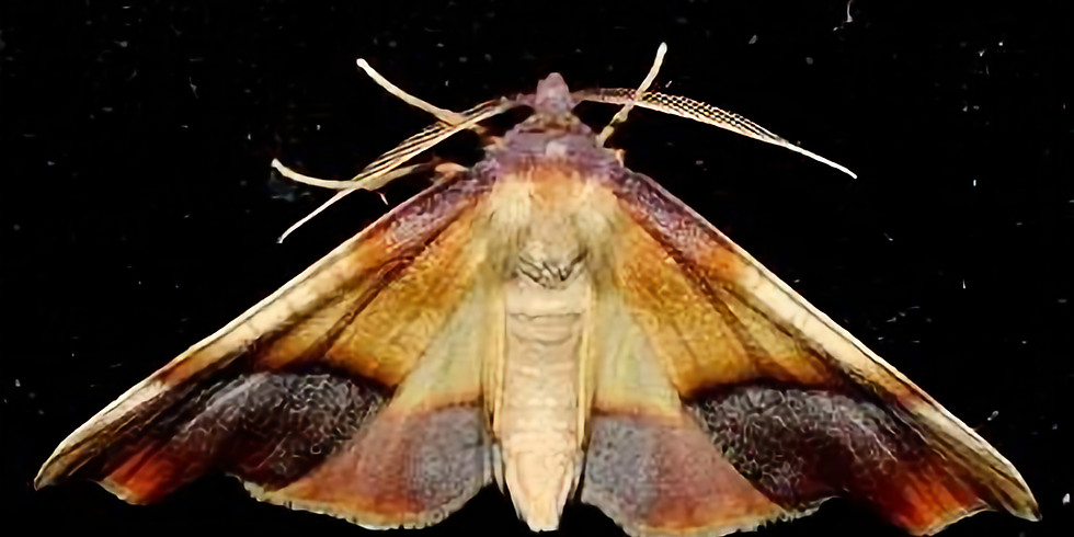 9:00 p.m. Moth Party – Larry McDaniel – (9 Adventurers maximum at a time)
