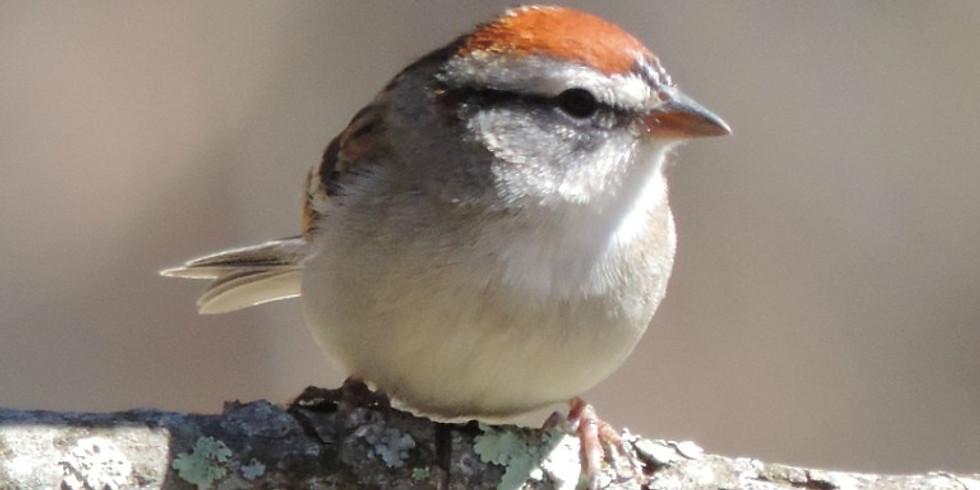 8:30 a.m. Birding at Hampton Creek Cove - Philip Hylen (9 participants maximum)