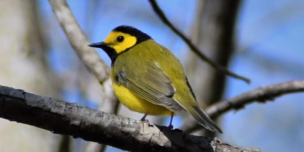 10:30 a.m. Birding by Ear - Larry McDaniel (9 participants maximum)
