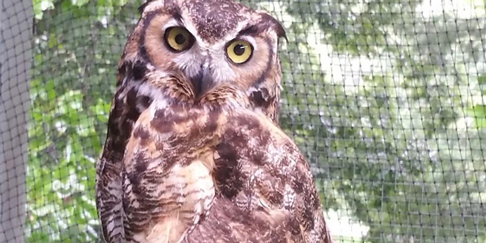 12:30 PM Owls - Phillip Hylen (9 participants maximum)
