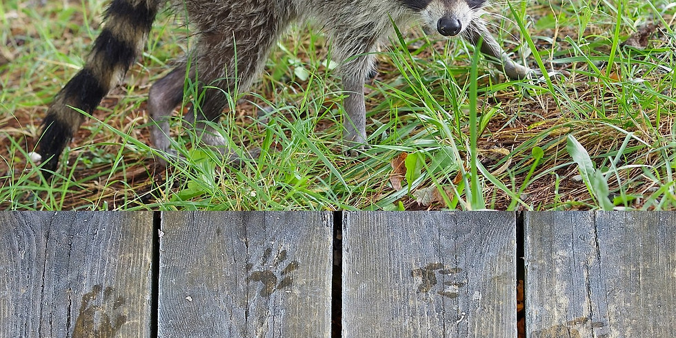 1:00 PM Wildlife Tracking and Signs - Marty Silver (9 participants maximum)