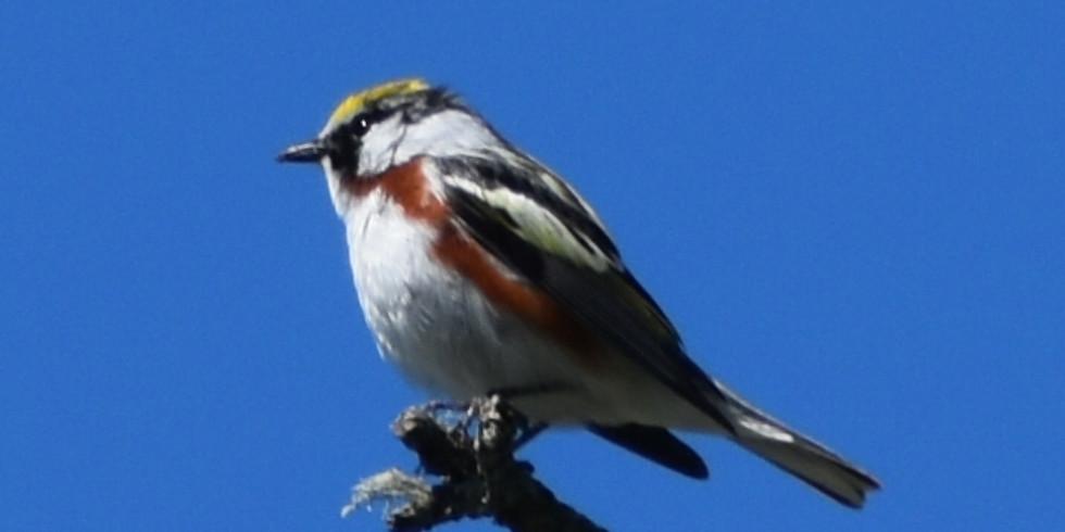 8:30 AM Beginning Birding - Joe McGuiness (9 participants maximum)