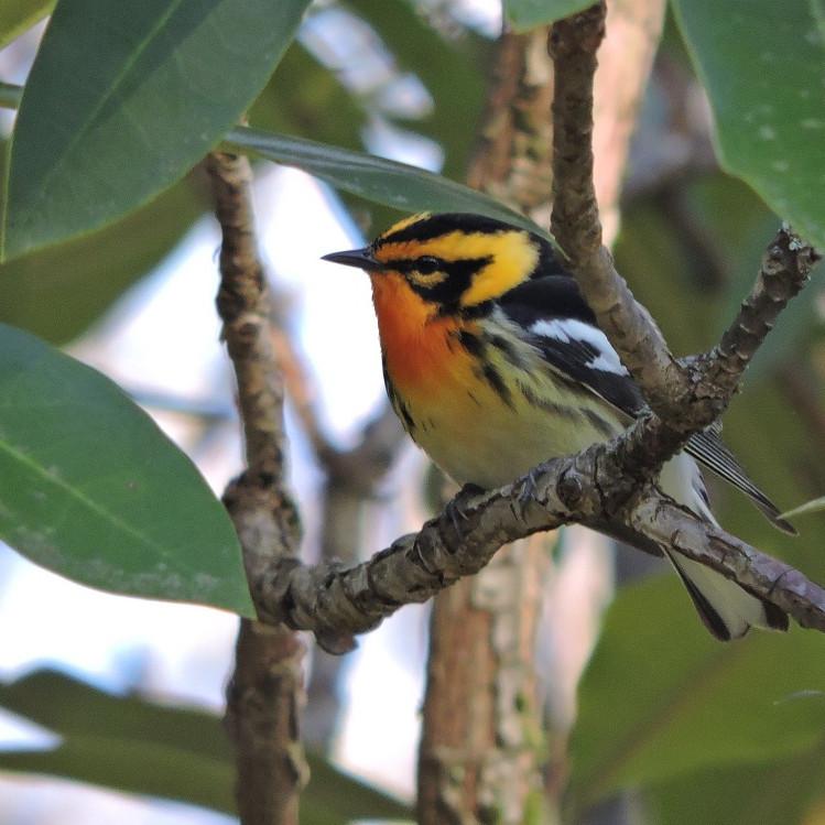 8:30 AM Birding - Cade Campbell & Adrianna Nelson (9 Participants Maximum)
