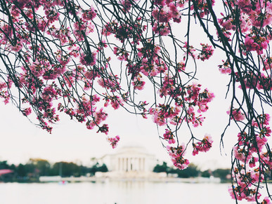Travel Diaries: Cherry Blossom Edition.
