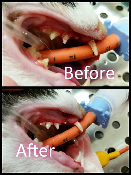 dental before and after 3.jpg