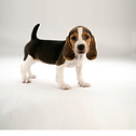 puppy for nutrition pop up.png