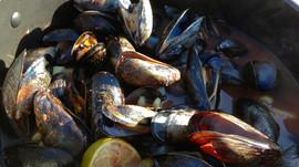 Spicy Caesar Mussels
