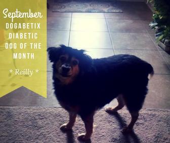 September DogaBetix Dog of the Month - Meet Reilly!