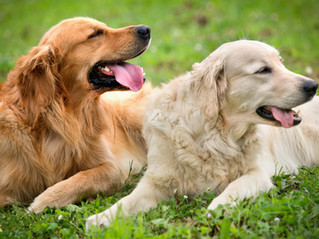 4 Summer Safety Tips for Diabetic Dogs!