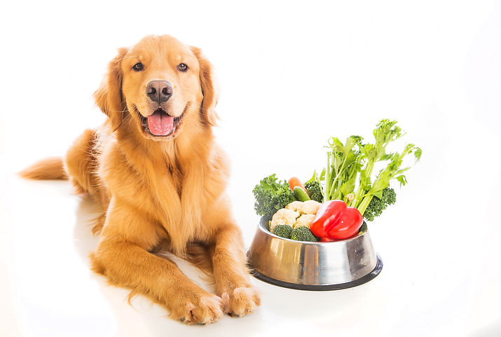 healthy foods for dogs with diabetes