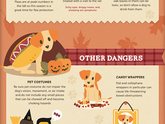 Keeping Your Diabetic Pup Safe During the Holidays!