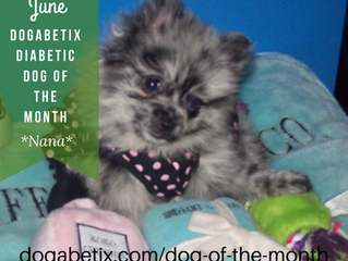 June DogaBetix Diabetic Dog of the Month...meet Nana!