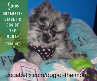 June DogaBetix Diabetic Dog of the Month...meet Nana!