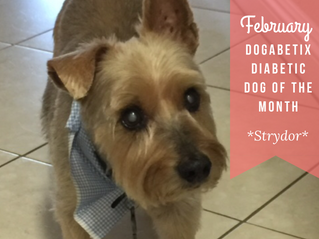 February DogaBetix Dog of the Month...meet Strydor!