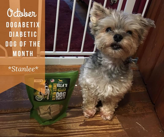 October DogaBetix Diabetic Dog of the Month! Meet Stanlee!