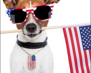 More Dogs Run Away on the 4th of July Than Any Other Day of the Year!