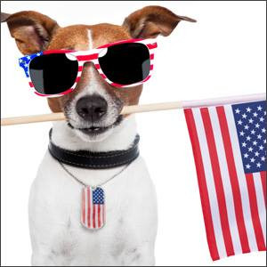 Keeping Pets Safe on the 4th!