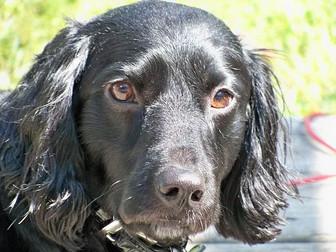 June DogaBetix Diabetic Dog of the Month - Meet Gertie!