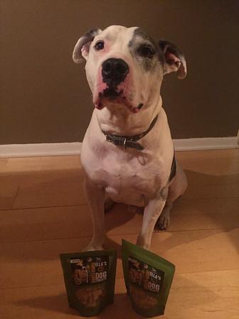 August DogaBetix Diabetic Dog of the Month - Meet Koolie!