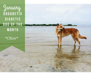 January DogaBetix Dog of the Month...meet Olive!