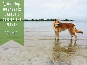 January DogaBetix Dog of the Month...meet Olive!