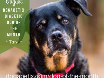 August DogaBetix Diabetic Dog of the Month...meet Tara!