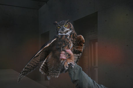 person%2520holding%2520brown%2520owl_edited_edited.jpg