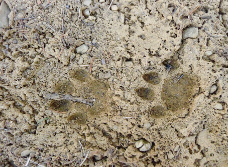 A Note on Wildlife Tracking